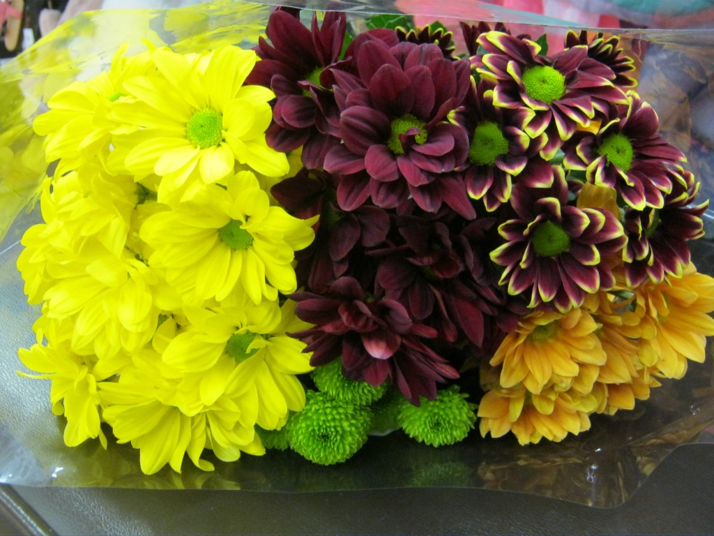 Chrysanths Selections