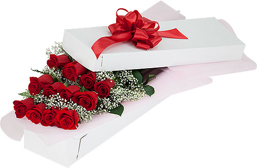 12 Red Roses & Baby's Breath in Presentation Box