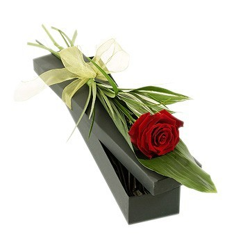 A Red Rose with Foliage in a Presentation Box