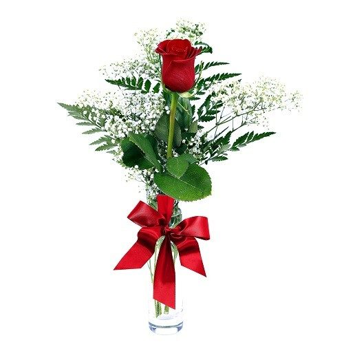 Rose in Vase for Birthday, Anniversary Flower,Valentine Flowers and More