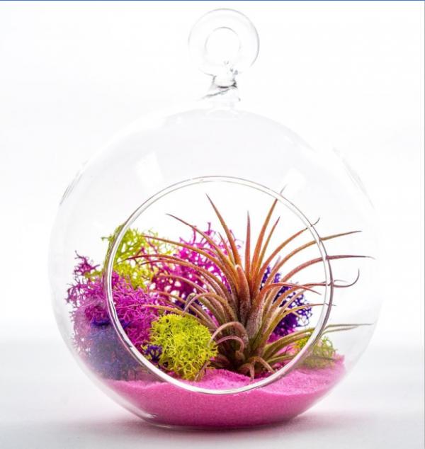 Glass Ball Terrarium with Air Plant